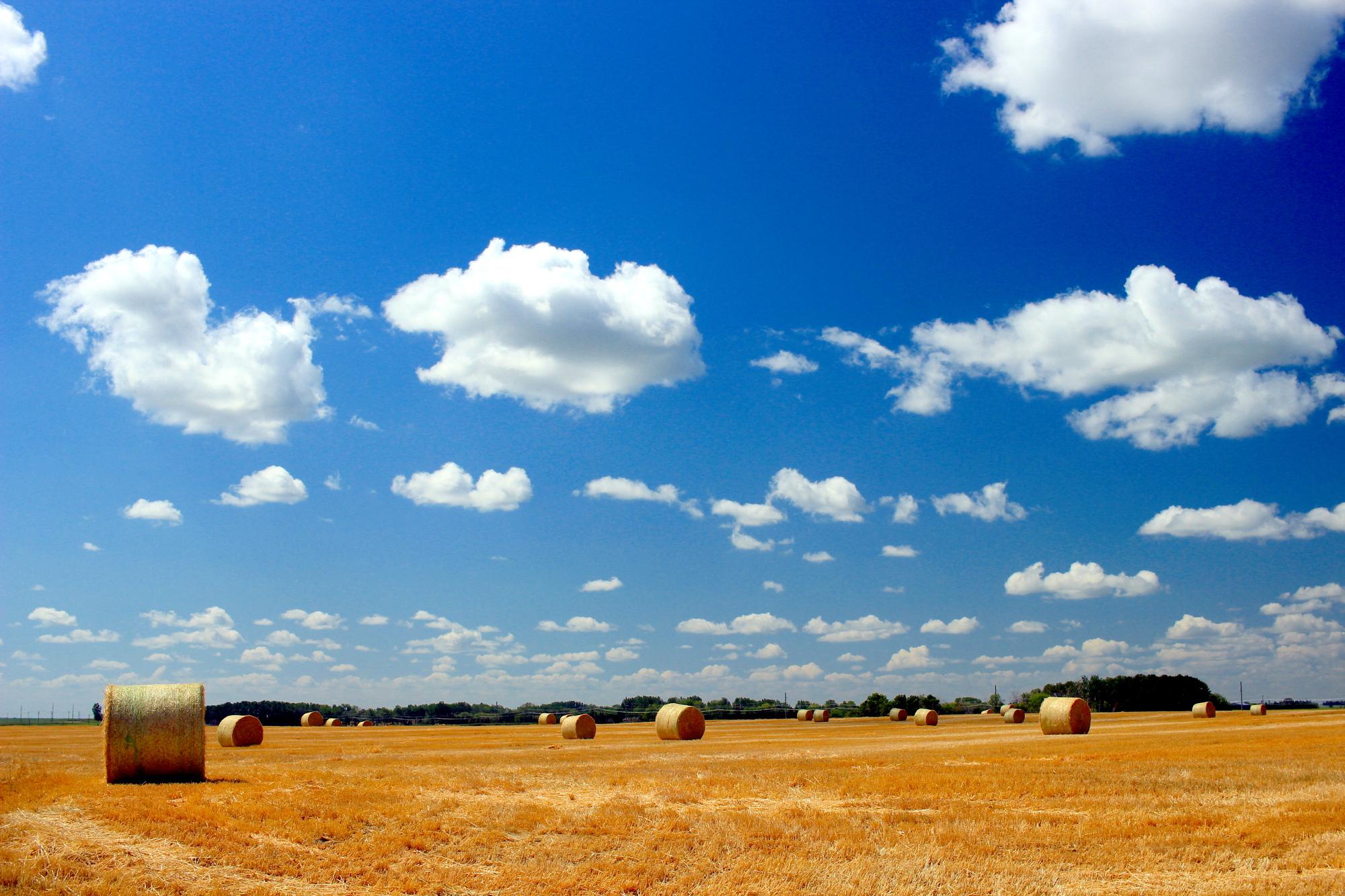 Bales under the prairie sky