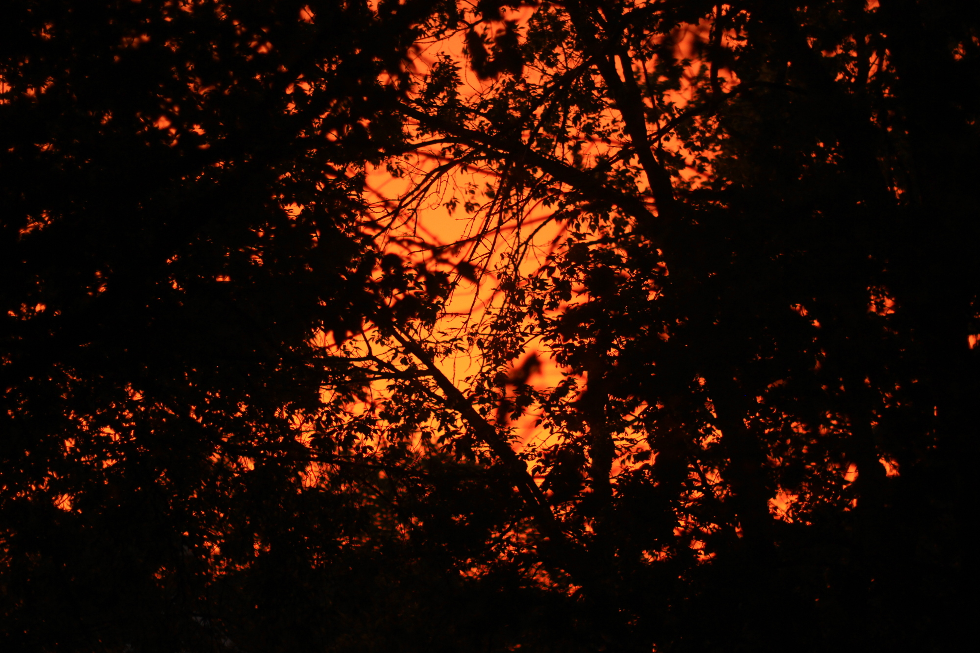 Orange sky through the trees