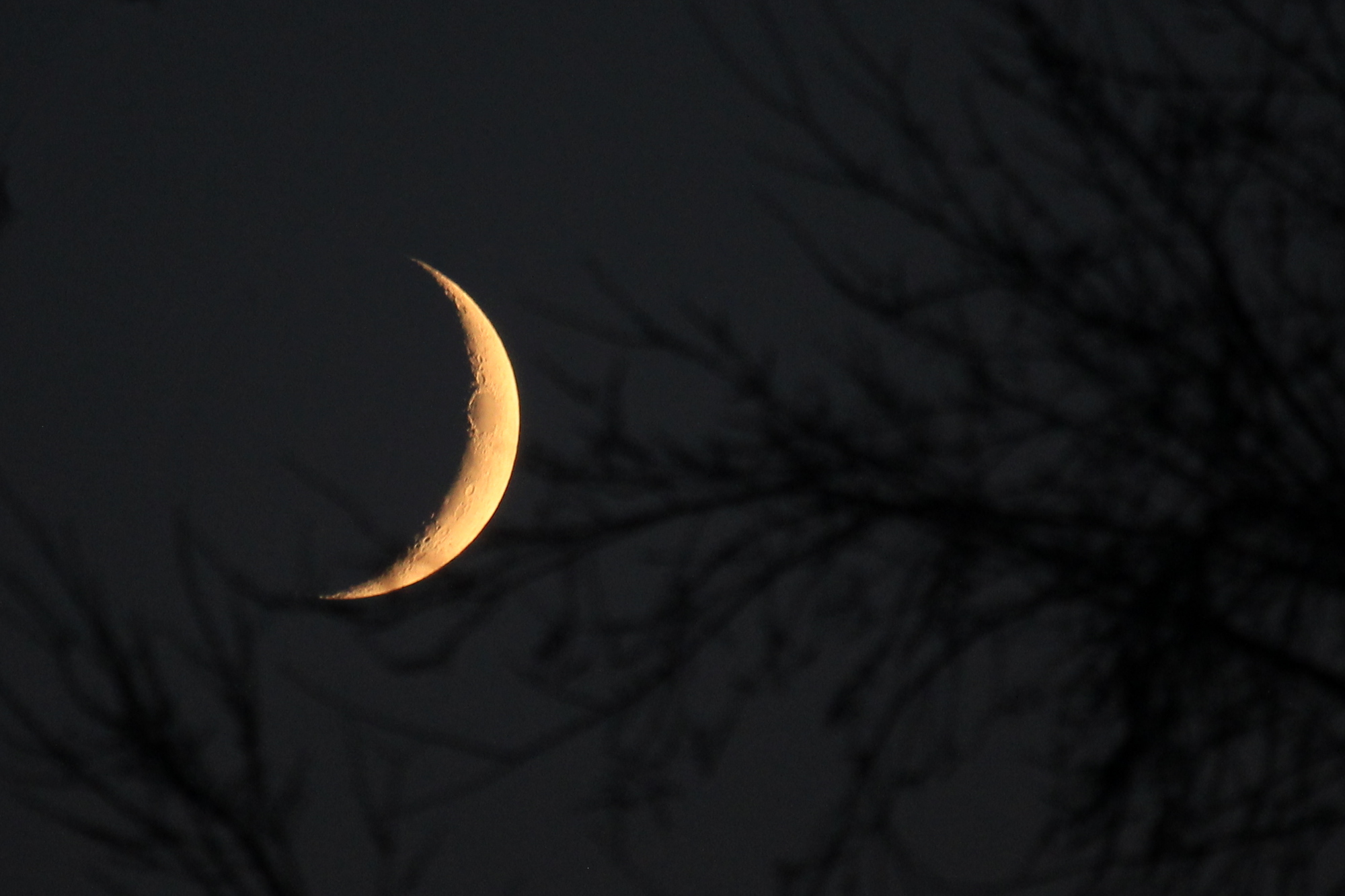 The crescent moon behind tree branches