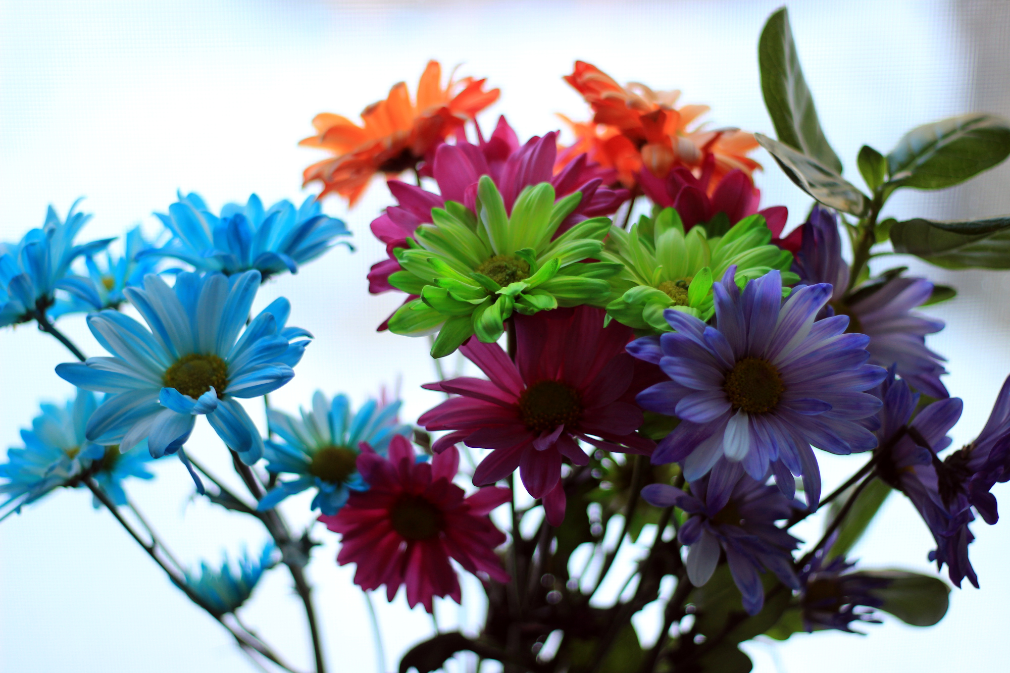 Brightly-coloured flowers