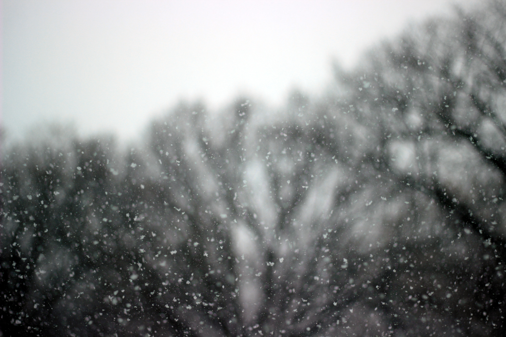 Snow in the air, with blurred trees as a backdrop