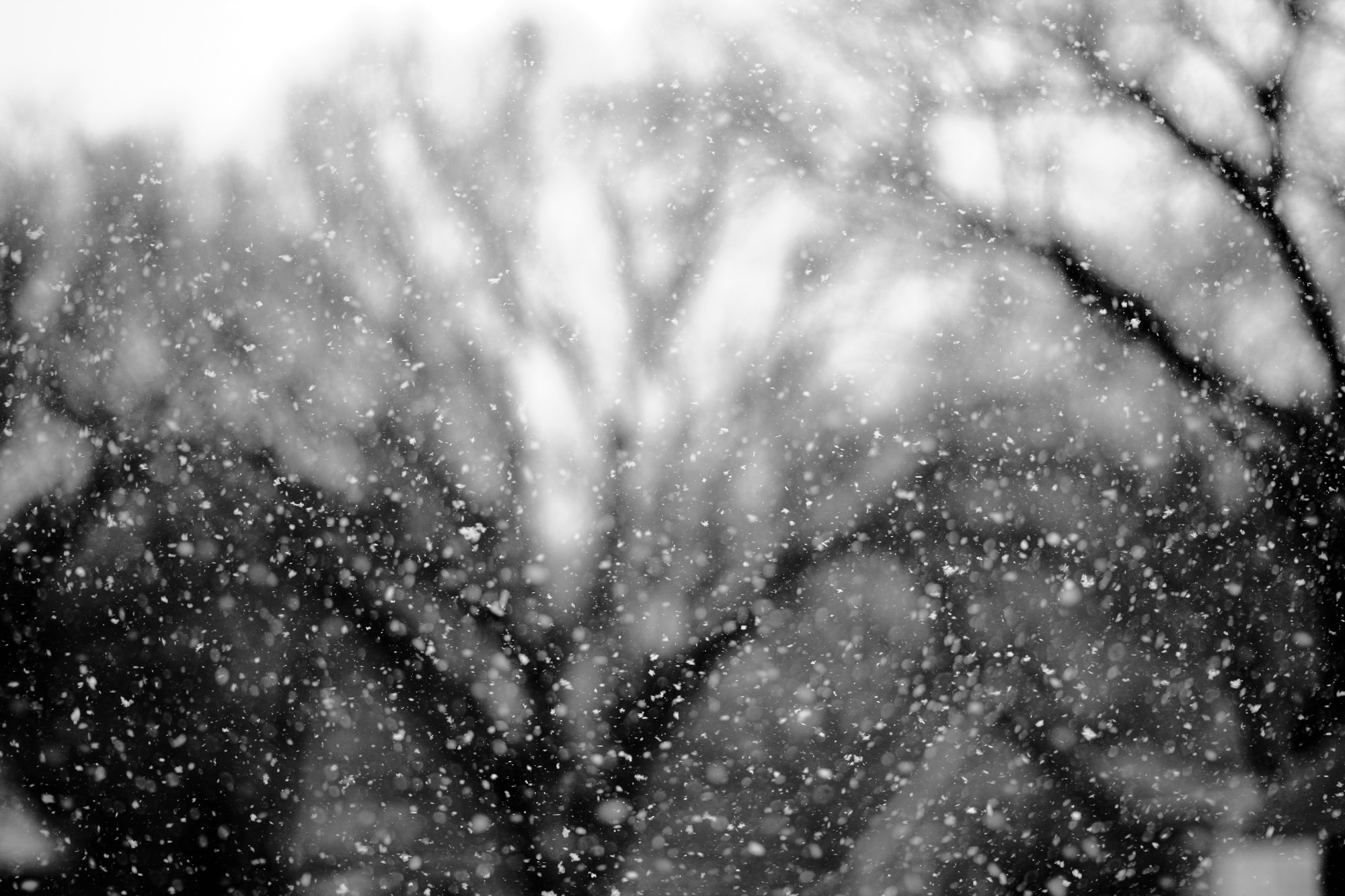 Snowflakes against the trees