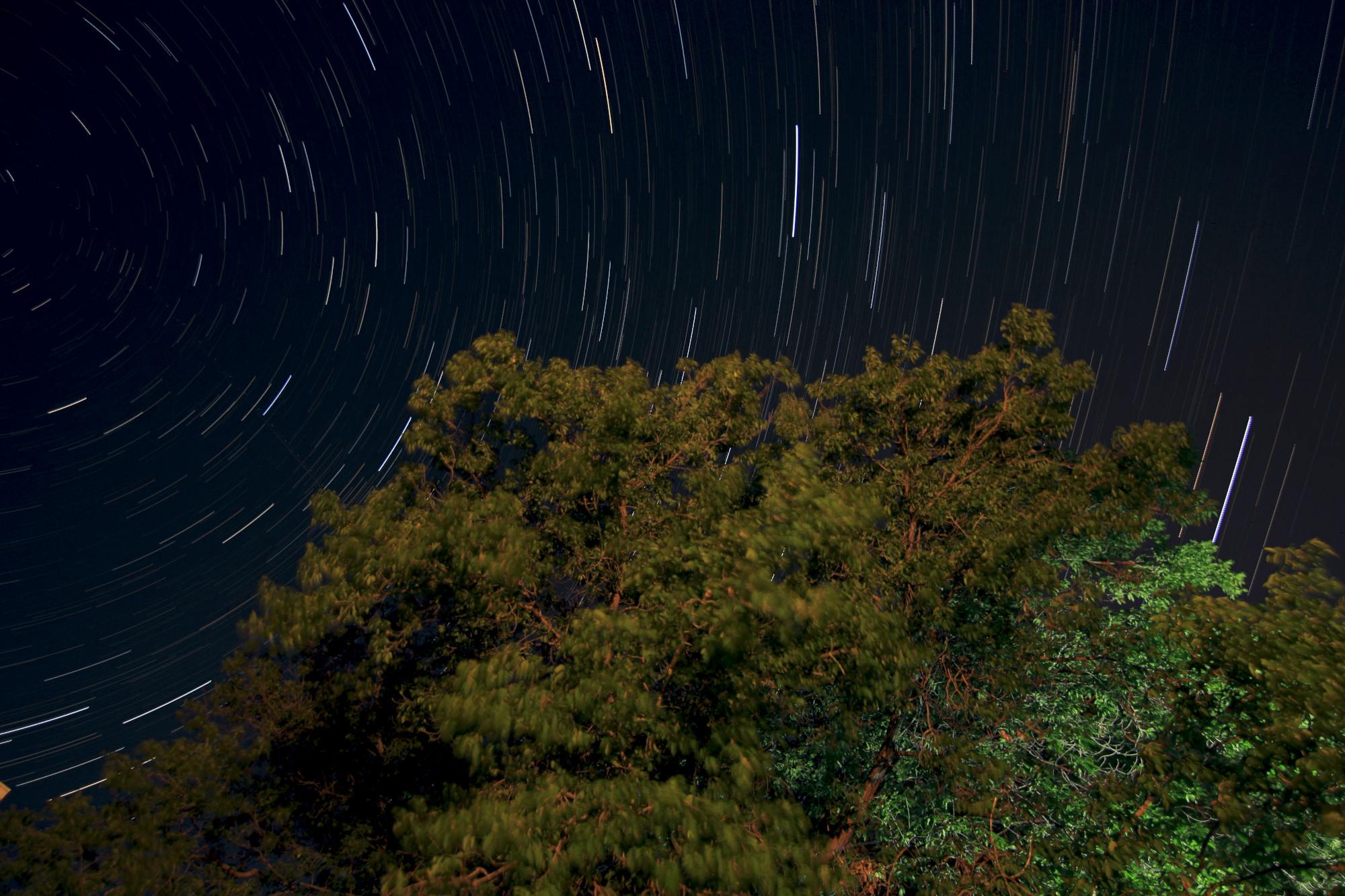 Star trails and a tree