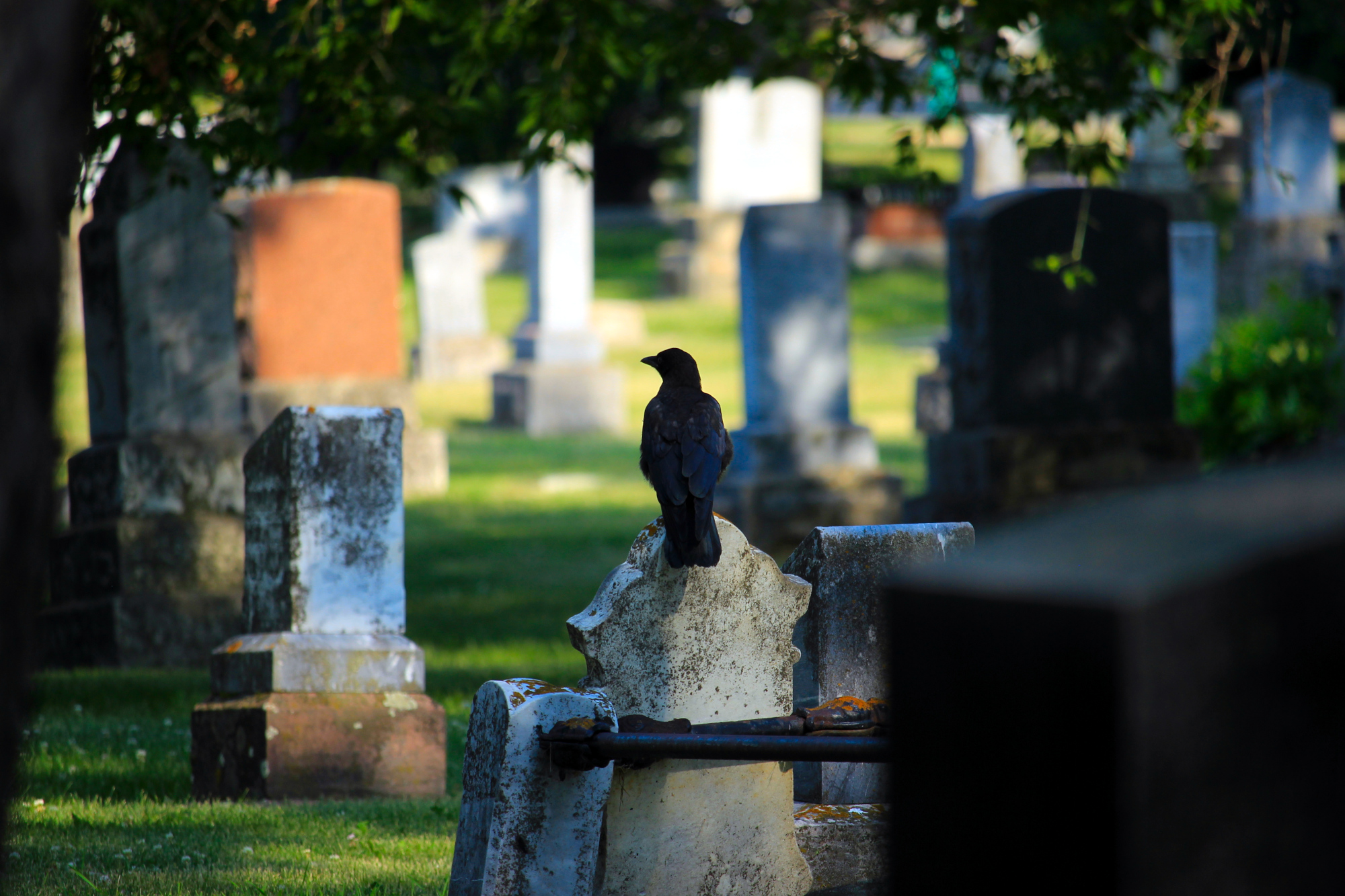 A crow perched on a headstone at the cemetery